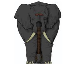 the black elephant band