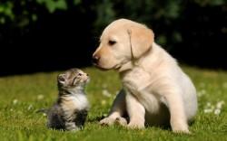süßes kätzchen und hündchen